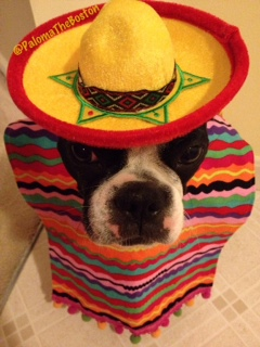 Happy Dwinko De Mayo!